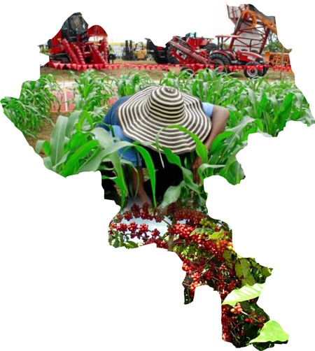 Cauca - Agro