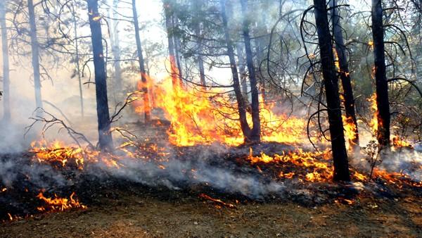 Incendios en el Cauca