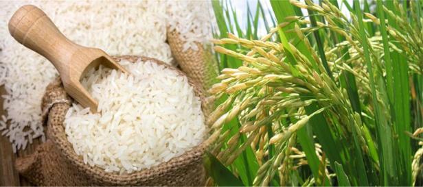 O bajan los precios del arroz o hacemos que bajen - Aurelio Iragorri