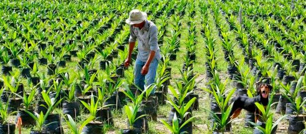 Desarrollo rural - campo - Colombia