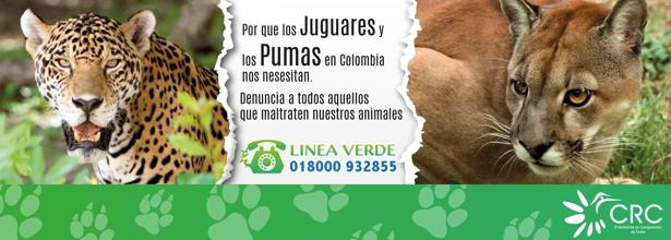 Maltrato a felinos - CRC - Cauca