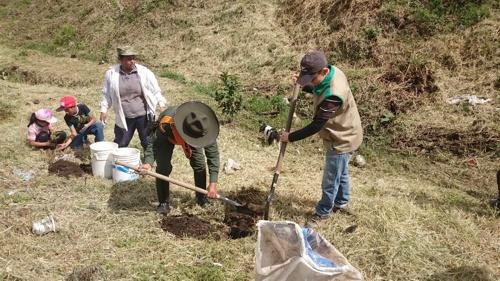 210 plántulas fueron sembradas en el humedal Las Palmas