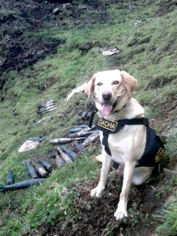 Desmantelan depósito de granadas de las Farc en el Cauca