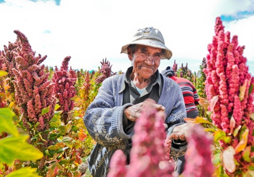 Productores de Quinua en el Cauca