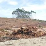 Continúa la destrucción del medio ambiente en el norte del Cauca