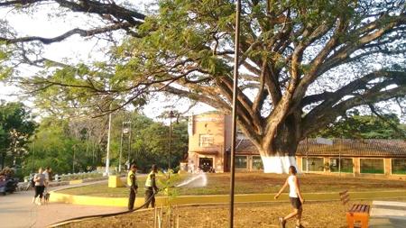 Parque Simón Bolívar - Samán Santander de Quilichao