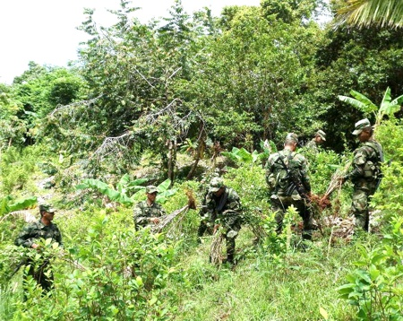 Erradican cultivos ilícitos en Cajibío, Cauca