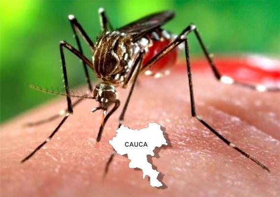 Enfermedades Transmitidas por Vectores en el Cauca - Zika en el Cauca