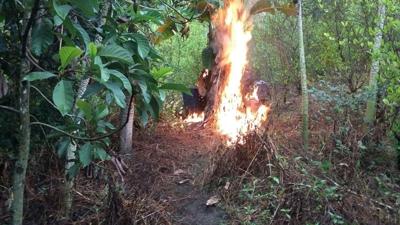 Destruyen laboratorio de coca en Almaguer, Cauca1