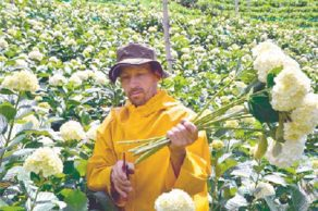 el-olor-de-las-flores