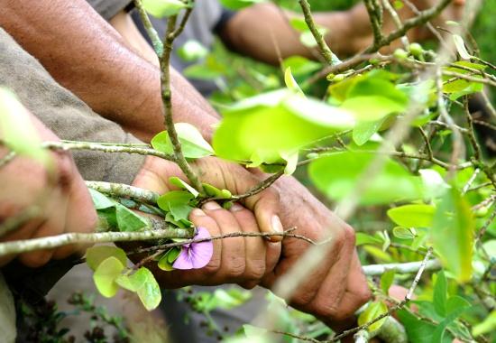 """""""En el Cauca se necesita paz con inversión social"""""""