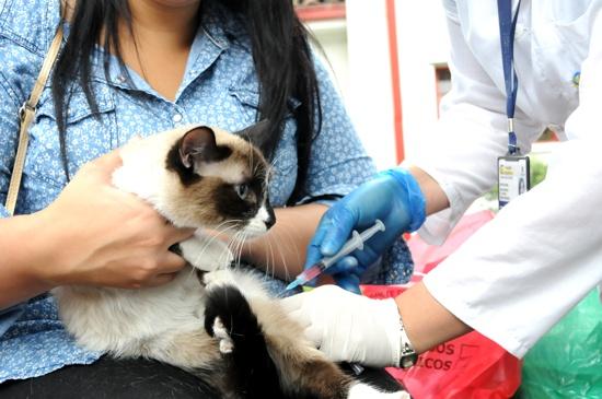 Vacunación antirrábica para perros y gatos en el Cauca