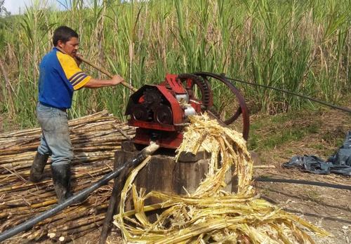 Agroindustria Panelera en el Cauca, transforma la vida de los productores