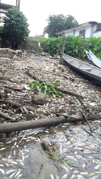 Alerta en Guapi por posible contaminación biológica