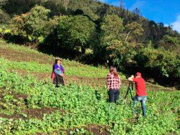 Quinua del Cauca reconocida a nivel nacional