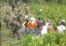 Rechazan erradicación forzada en Cajibío