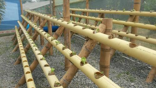 Se consolidan proyectos acuapónicos en Popayán