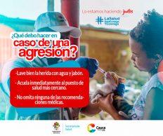 Incremento de casos positivos de rabia silvestre en el Cauca