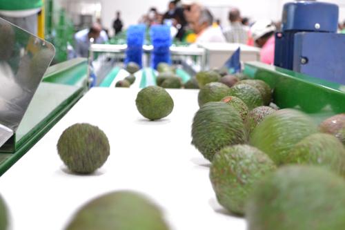 Centro de acopio en Piendamó beneficiará a 1600 familias agricultoras