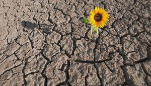 Resiliencia, alternativa para sociedad en conflicto
