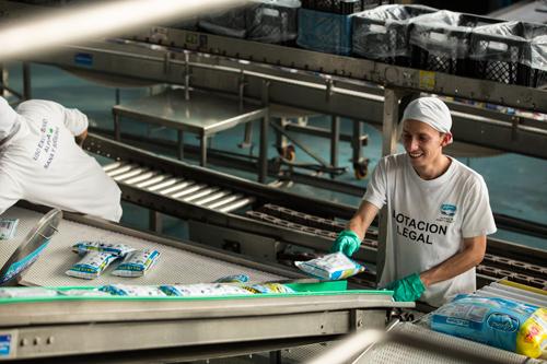 Traslado de Alpina a Caloto dinamiza la economía del Cauca