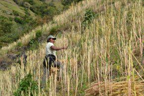 Aumenta competitividad en la producción de Quinua