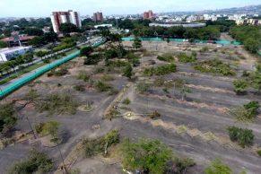 La Fundación Defensa de Inocentes rechazó a través de un comunicado el arboricidio realizado el día 19 de Junio en los parqueaderos de la Plaza de Toros Cañaveralejo de la ciudad de Cali