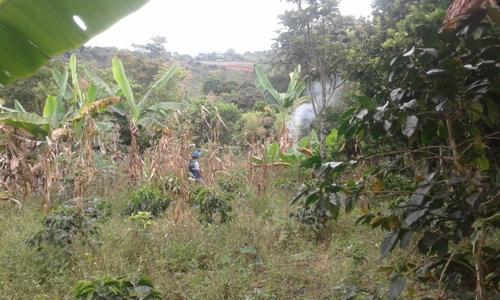 Pueblo Misak de Caldono suplica protección humanitaria