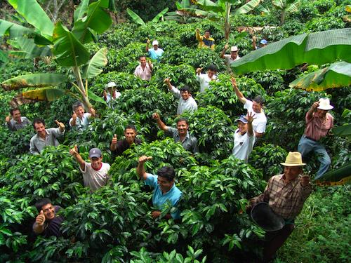 Producción de café de Colombia creció 2,5% en primer bimestre del año