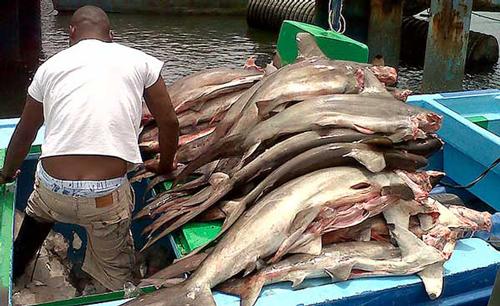 Condenados por pesca ilegal y homicidio