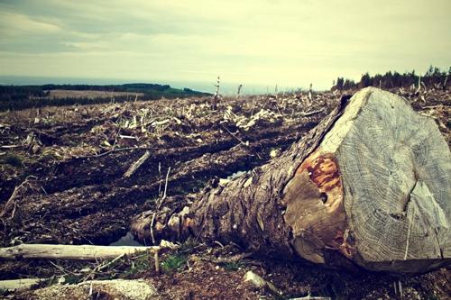 Posconflicto y Medio ambiente