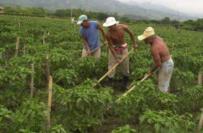 Campesinos y Empresarios