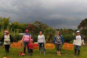 El mejor Ají de Colombia, lo cultivan mujeres caucanas