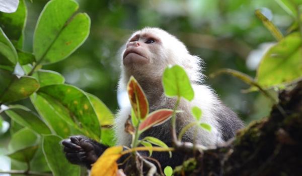 DE-FORESTACIÓN EN LA AMAZONIA