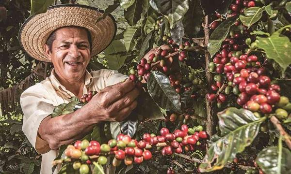 Totoró, tierra del mejor café del Cauca