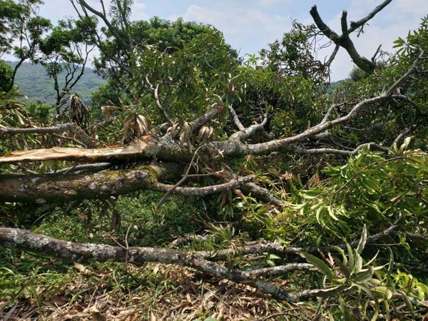 Indígenas invaden propiedad privada y talan el bosque