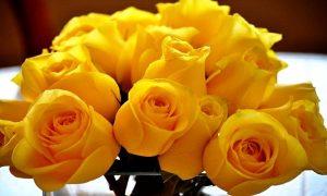 Rosas amarillas para las madres