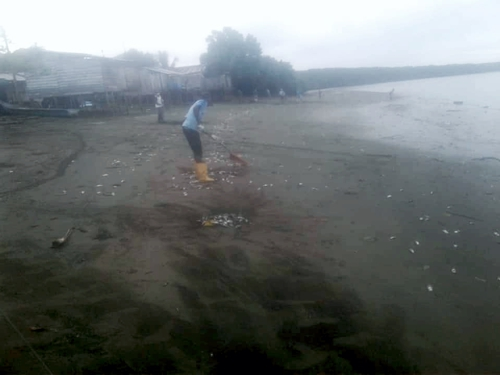 Un nuevo exterminio de la fauna íctica se presenta desde hace más de tres semanas en la vereda Chacón Playa del municipio de Timbiquí