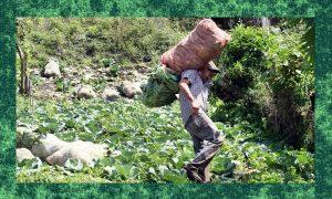 La Economía Política del cambio agrario