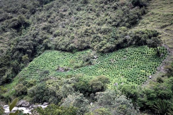 Las autoridades tradicionales de Toribío