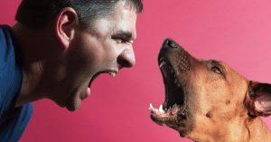 Pobreza - inseguridad y vida de perros
