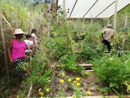Productores caucanos tienen conciencia ambiental y preservan el suelo