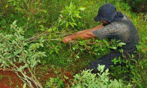 Ataque armado deja otro indígena muerto