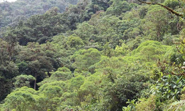 El Cauca cuenta con nueva área protegida