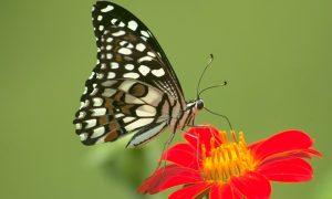 Un juego sobre mariposas, palabras y tornamesas