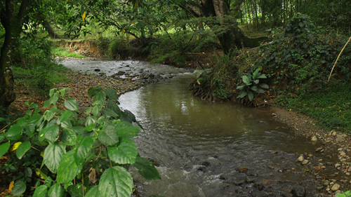 ¡Aguas negras caen al rio Quilichao!