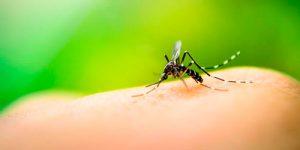 Córtale las alas al Dengue