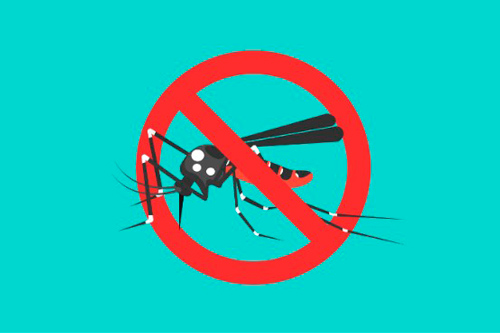Rompe la transmisión del Dengue