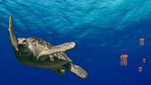 Para recordar en el Día Mundial de los Océanos