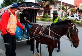 Carretilleros reafirman compromiso de la Alcaldía por el bienestar animal